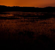 Molten night – Great Meadows series by Owed to Nature
