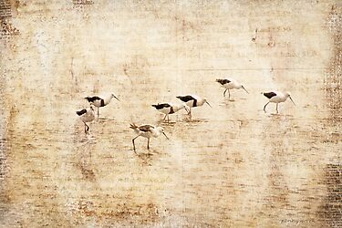 Banded Stilts by pennyswork