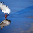 Gull Vanity! by Jenni Greene