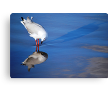 Gull Vanity! Canvas Print