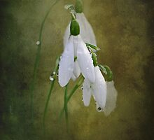 Snowdrops and Raindrops by Karen Martin