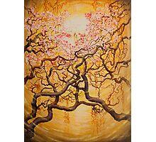 Sun and Sakura Photographic Print