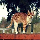 I am a mighty Fence climber!! by AngieBanta