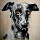 Italian Greyhound by Hilary Robinson