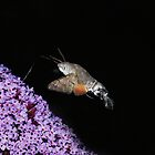 Hummingbird Hawkmoth feeding by Rivendell7