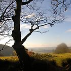 A Walk On The Quantocks  .. 3 by Mike  Waldron