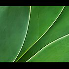 Agave Leaves 3 by Tess Buckler