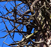 Twisted Branches by Paige Parakin