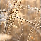 Beautyfull Winter by liesbeth