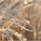 Beautyfull Winter II by liesbeth