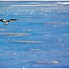 Flight over icy waters by cactuspink