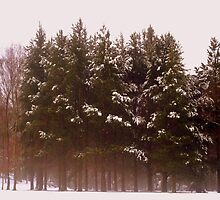 Winter Trees by shelleybabe2