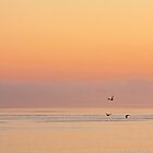 February Flight at Sunrise over Strait of Georgia  by TerrillWelch