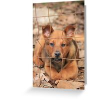 Little Gracie Greeting Card