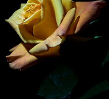 Please Be Mine, Valentine by TeresaB