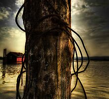 Wired  by Erik Brede