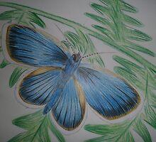 Butterfly by Gez Sullivan