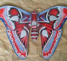 moth by Gez Sullivan
