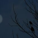 Roost by Moonlight by bannercgtl10
