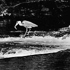 The Heron Strikes, River Barrow, Graiguenamanagh, County Kilkenny by Andrew Jones