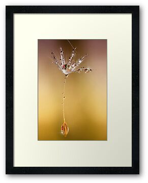 Dew drop sparkle by Lyn Evans