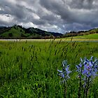 In All It&#x27;s Beauty ~ Wild Camas ~ by Charles &amp; Patricia   Harkins ~ Picture Oregon