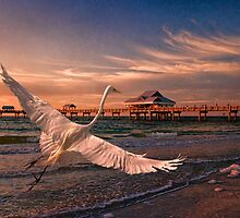Clearwater Egret by Tarrby
