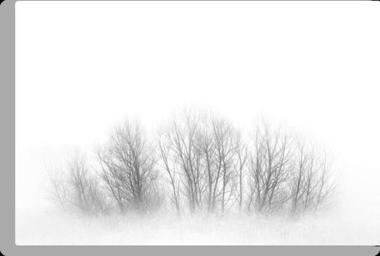 Fogged Family Trees by Ryan Smith