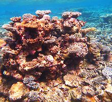 beautiful corals by supergold