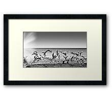 seagulls on takeoff Framed Print