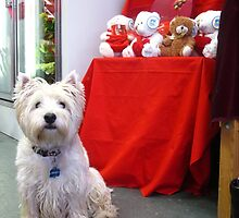 Westie seeks beau for Valentine's Day! by MarianBendeth
