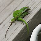 Anolis Mating - Close Up - Love Can't Wait by JeffeeArt4u