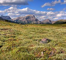Sunshine meadows III (HDR) by zumi