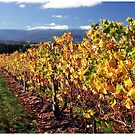 Autumn vines, Yarra Valley by Chris Livingstone