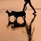 Dogs and walker reflected on a beach in seminyak, Bali, Indonesia by Michael Brewer
