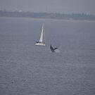Sailboat With Whale - Velero Con Ballena by Bernhard Matejka