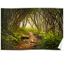 Appalachian Hiking Trail - Blue Ridge Mountains Forest Fog Nature Landscape Poster