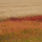 September Fields by Trish Sweett
