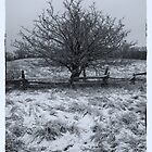 Frosty Tree by Craig Brown