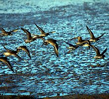 In Flight by Darren Burroughs