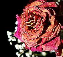 Vintage Rose by Terri~Lynn Bealle