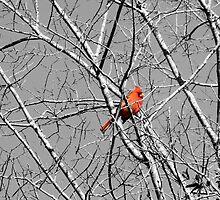 In the Tree by rosaliemcm