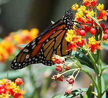 The Butterfly and I by yoscy