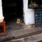 guard dog by offpeaktraveler