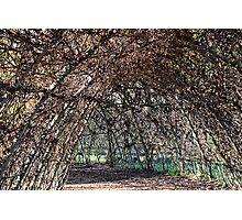 Giant Willow Maze At Abbotsbury Swannery, Dorset Photographic Print