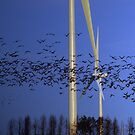 Wind Power by Bootkneck