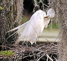 Great White Egret Nesting In The Spanish Moss by Kathy Baccari