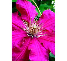 Hot Pink  Photographic Print