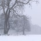 Winter at Ankerwyke by wraysburyade
