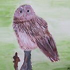 Owl by Monika Howarth